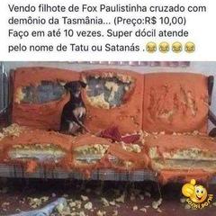 Edy Pedreira
